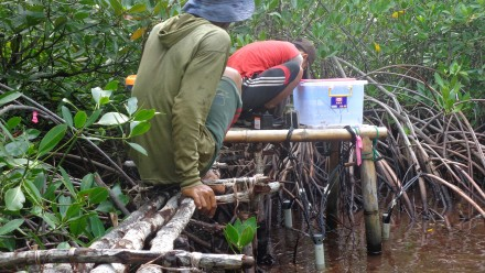 Two men examine a measuring station with the mangroves
