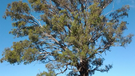 Old tree in urban greenspace
