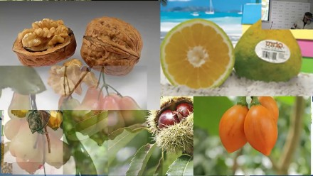 Tree Gastronomy: Trees are more than just fruits and berries - with A/Prof Cris Brack