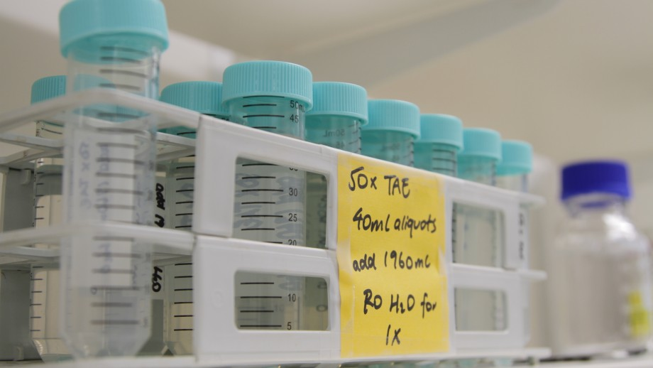 A close-up of a row of test tubes for DNA extractions, with pale blue twist-top lids.