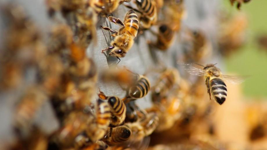 A mass of bees