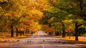 Autumn leaf colour changes and fall are affected by summer temperatures.